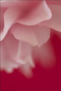Screen Shot 2015-04-17 at 12.37.30 AM