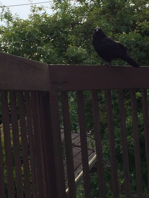crow1 JEH